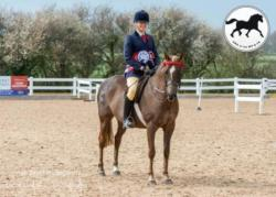 Supreme Ridden Reserve Champion Song of the Stars